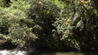 Pan to cloudforest river, in the Andes, Ecuador.