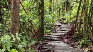 Path running through tropical rainforest