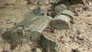 Petrified tree trunks in Puyango Petrified Forest in southern Ecuador