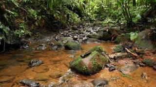 Rainforest stream in the Ecuadorian Amazon