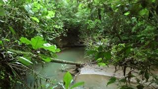 Rainforest stream. In the Ecuadorian Amazon.