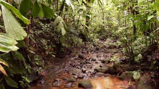 Rainforest stream in the rainforest, Ecuador