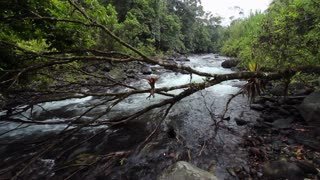 Rio Mindo running through montane rainforest in western Ecuador
