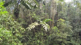 Rising towards the canopy of primary Amazonian rainforest in Ecuador