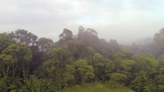 Rising up over the misty rainforest canopy at dawn in Ecuador