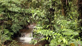 Stream flowing through cloudforest. In the Andes, Ecuador