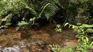 Stream flowing through cloudforest in the Andes, Ecuador