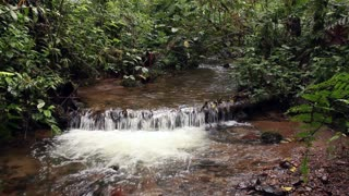 Stream flowing through cloudforest, pan to treefern. In the Andes, Ecuador
