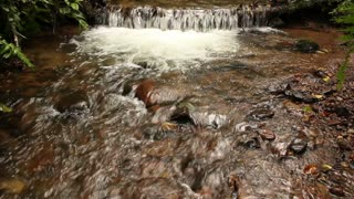 Stream flowing through cloudforest with waterfall. In the Andes, Ecuador