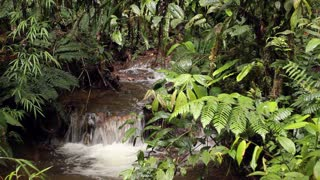 Stream flowing through cloudforest