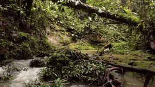 Stream in Amazon Rainforest