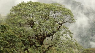 Tree in cloudforest in the Ecuadorian Andes