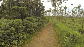 Tropical rainforest converted to a cattle farm in the Ecuadorian Amazon