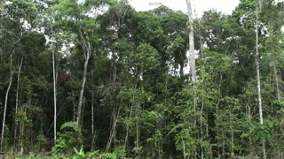 Tropical rainforest felled for slash and burn agriculture, Ecuador