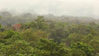 View over lowland tropical rainforest, Ecuador