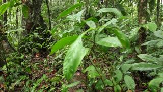 Walking along a fallen log on the rainforest floor