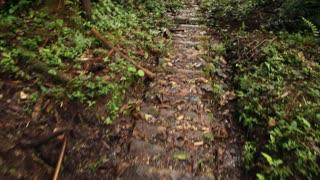 Walking along a path through a cloudforest reserve