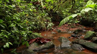 Walking along a rainforest stream, Ecuador