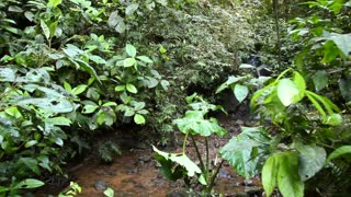 Walking along a rainforest stream to a waterfall in the Ecuadorian Amazon