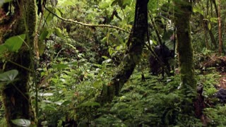 Walking around a tree fern in cloudforest in the Andes, Ecuador
