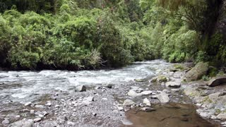 Walking down a river in cloudforest, in the Andes, Ecuador.