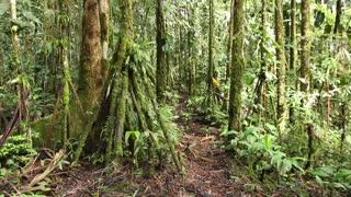 Walking through mossy tropical rainforest in Ecuador