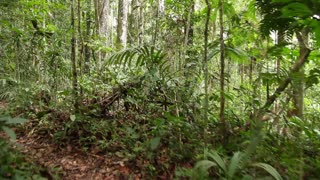 Walking through tropical rainforest in the Ecuadorian Amazon
