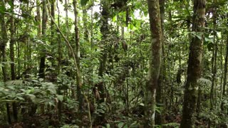 Walking through tropical rainforest