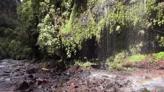 Walking to a waterfall with double rainbow, in the Andes, Ecuador.
