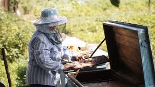 beekeeper checks beehive