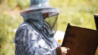 beekeeper checks the hive with bees