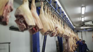 A large batch of pork carcasses hang on metal hooks. manufacture of meat products