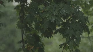 Rainy storm outside. Derevev branches sway in the wind in the rain in slow motion