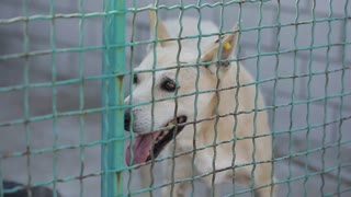 Stray Dog or Abandoned Dog in Cage