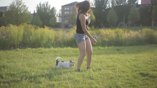 Young girl playing with white dog in the park, playful, sun rays