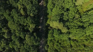 Aerial view of the road through green forest.
