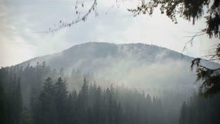 Beautiful Carpathian Mountains in morning fog