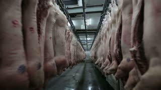 Dolly shot. Pork body hanging in the freezer. Meat Factory. Meat processing in food industry