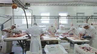 Dolly shot.Butcher Cutting Pork Meat in Meat Factory. Fresh raw pork chops in meat factory. Meat processing in food industry. Production line in meat processing plant.