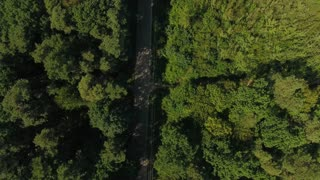 Flight over road in wood