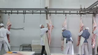 Group of butchers cutting hanging pork meat in a butchery. Meat processing in food industry