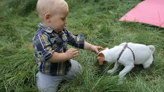 Little boy plays with a dog in the backyard
