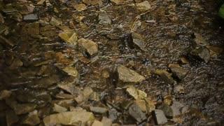 stream, a small, narrow river.