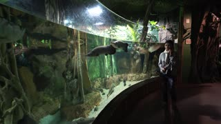 a Woman with audio excursion watching fishes