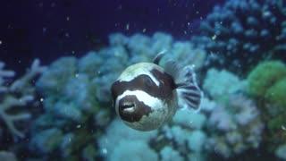 Beautiful exotic fish in the oceanarium