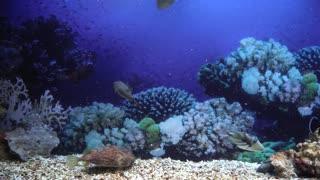 Beautiful fish and corals in the oceanarium