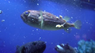 Beautiful fish in the oceanarium pool