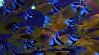 colorful yellow and blue fish in Oceanarium