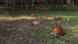 cute deer lying in front of forest