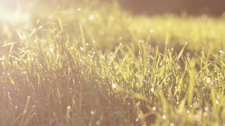 dew on a green grass in sunrise